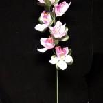 Orchideja 0.58€