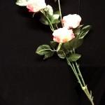Rožės 1.7€